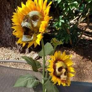 Skull Head Simulation Sunflower