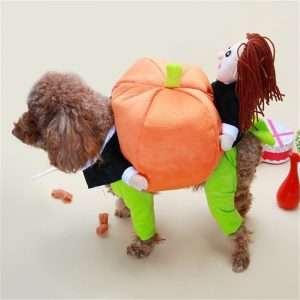 Pet Halloween Pumpkin Costume