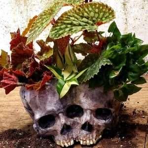 Halloween Skull Flower Pot